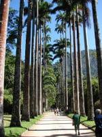 Jardim Botânico - Botanic Garden - Rio de Janeiro