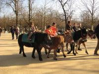 Jardin du Luxembourg - Pony Ride