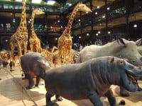 Muséum d'Histoire Naturelle - Grande Galerie de l'évolution