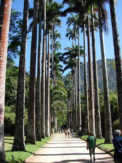 Jardim Botânico do Rio de Janeiro (Rio de Janeiro Botanical Garden)