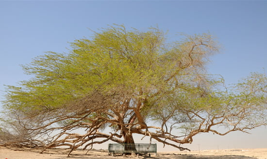 The Mysterious Tree of Life in Bahrain - World Top Top