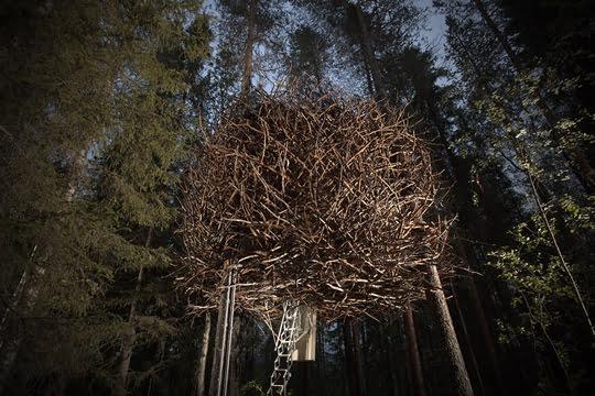 Птичье гнездо - TreeHotel