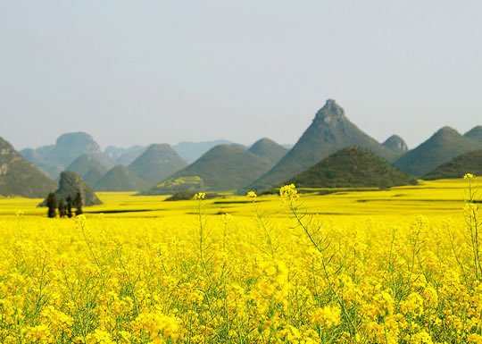 Top 15 flower fields in the world world top top canola flower fields luoping county china mightylinksfo