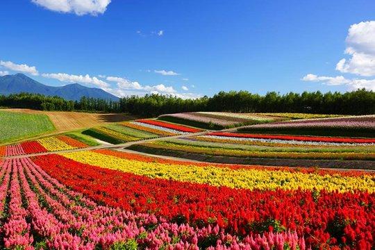 Free Images : nature, flower, bloom, summer, orange, spring, green ...