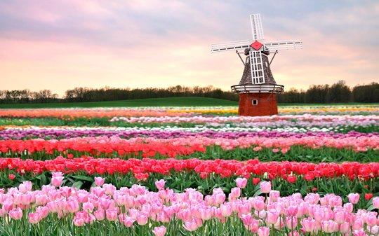 Top 15 flower fields in the world world top top tulip fields netherlands mightylinksfo